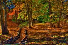 Fall paths