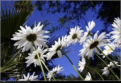 Tomando solcito (ifoto.cl) Tags: chile santiago flores primavera canon rebel xt photos fotos navarro osvaldo thok tamoe ignacionavarro thokrates osvaldonavarro