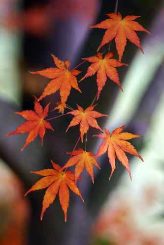 Fall Fireworks by jeffsmallwood, on Flickr