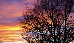 A Moment of Splendor (Jeff Clow) Tags: sunset tree nature silhouette ilovenature explore jeffclow abigfave