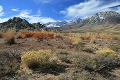 Cerro Gordo Buttermilk 269 (Steve Perdue) Tags: fallcolor 395 easternsierra buttermilkcountry
