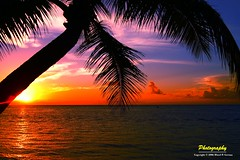 Tropical Sunset - Saipan Island (neodelphi) Tags: sunset beach nature island coconuttree framing nyip saipan tropicalsunset cotcpersonalfavorite 1on1sunrisesunsets 25faves sonyalpha 1on1sunrisesunsetsphotooftheday superaplus aplusphoto neodephi onlyyourbestshots