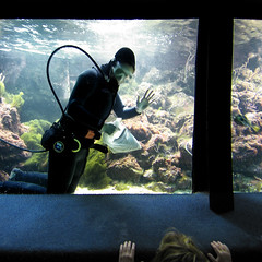 the life aquatic (seymour templar) Tags: nyc coneyisland published sasha newyorkaquarium explored seymourtemplar