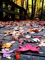 Fall Footbridge - by flattop341