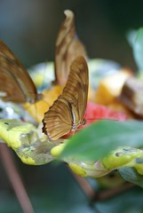 Old ladies (H Campos) Tags: blue trees red sky plants plant black flower macro tree colors beautiful beauty leaves yellow closeup butterfly zoo fly frozen wings movement eyes colorful dof eating butterflies sigma insects trunk manualfocus antenna 105mm leav sonyalpha