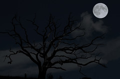 In The Moonlight (Ms Ladyred) Tags: moon moonlight specnature abigfave