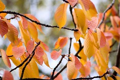 autumn-colors-1 (swifty_mcvey) Tags: autumn winter color london ice water leaves warm colours freezing warmcolor warmcolours hardkohr neilrobinson