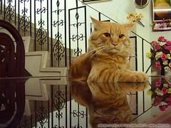 Meow (Jamash) Tags: pakistan cute art nature cat meow lovely karachi jamal jamash ashiqain jamalashiqain mashaallah