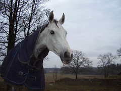 Our neighbours have horses (fotrristi) Tags: 15fav horse pet field animal rural 510fav landscape geotagged countryside fantastic sweden congratulations coolest animalplanet topi naturescenes obt smo 111v1f 50v5f interestingness479 topphotoblog i500 thebiggestgroup animaladdiction explore19nov06 abigfave p1f1 5for2 ratedpro faveanimal bfv1 geo:lat=58996825 geo:lon=17951982 aplusphoto ratedproaintnewbie aintnewbie invitedphotosonlyaintnewbie awhoahphoto