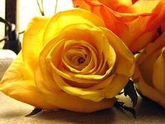 My flowers.