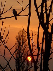 Sun and bird (horstgeorg) Tags: autumn sun nature colors birds silhouette sunrise wow landscape bulgaria burgas blacksea helluva thecontinuum abigfave aplusphoto