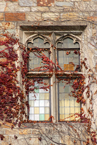 Ivy and Windows
