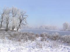 A winter scene (annkelliott) Tags: winter snow canada calgary nature river seasons hoarfrost explore alberta bowriver interestingness136 olympusc750uz i500 specland annkelliott explore2007jan13