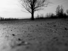 (dlemieux) Tags: road blackandwhite bw usa blur tree texture rural america wow landscape blurry focus vermont dof angle bokeh pov low country perspective dlemieux newengland bestviewedlarge saturday roadtrip pebbles outoffocus depthoffield thanksgivingweekend lowdown 510favorites ferrisburgh stilllovinupthetreesisee