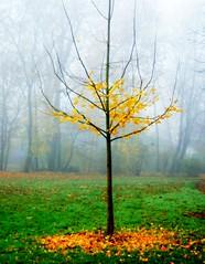 Late Autumn (aremac) Tags: autumn trees fall nature fog d50 germany landscape deutschland nikon nikond50 foliage parc neckarhausen