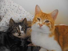 (; (Marchnwe) Tags: orange cats colour cute cat eyes little sleep ear