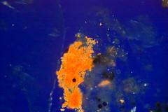 birefringent bacteria