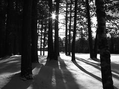 Long Dark Shadows (Micky**) Tags: blackandwhite sun snow beautiful minnesota mrjackfrost micky bravo long shadows searchthebest quality explore eveleth sunstar magicdonkey instantfave explored specnature theworldthroughmyeyes twtme abigfave zlimen
