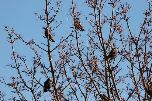 small birds in tree