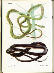 DBG11.2- 3/3/09 (Montague Projects) Tags: lagos naturalhistory bookcover snakes guidebook dailybookgraphics
