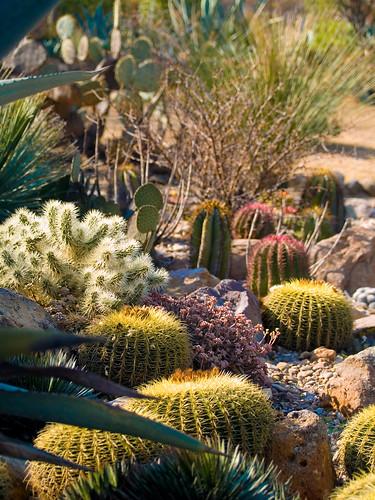 San Miguel Photos Garden Design with Cacti