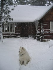 Cabin with Snow!