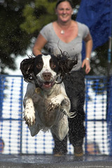"""Bailey"" (Steve Collins Photography (momofoto)) Tags: wood geotagged nikon farm whitbread 2006 september dash bailey hop d200 splash paddock pawsinthepark dockdogs dashnsplash whitbreadhopfarm geolat512003 geolon0392073 jettydogs emjet"