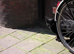 Gatto nero olandese dietro una bicicletta