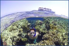 model in red sea (Fiona Ayerst) Tags: green landscape snorkel redsea egypt 2006 specialeffects overunder mercia freediver snorkeller scubapro d100nikon horizontalanimal seaseastrobes90s coralprincessboat liveaboardliving boatinbackground snorkelincoralgarden scubaprosteamer modelinbikiniunderwater