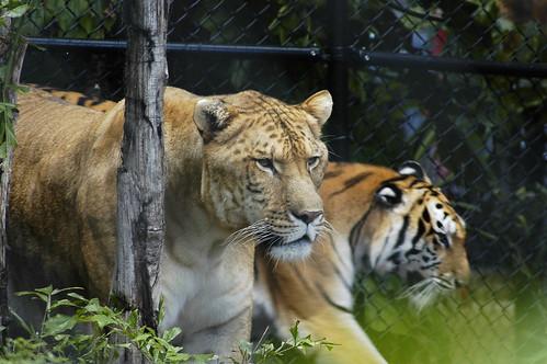 حديقة حيوانات المركز الدولى  - صفحة 5 263155105_9177bf320c