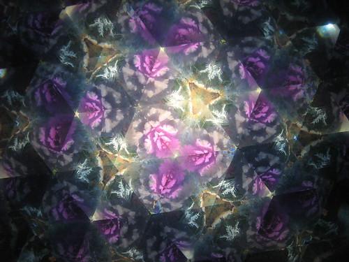 kaleidoscope purple cabbage