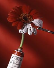 Paint Ad (Daniel Tckmantel) Tags: red flower color scarlet studio fun cool saturated bravo funny colorful paint quality creative advert 4x5 concept conceptual paintbrush largeformat magicdonkey outstandingshots outstandingshotshighlight rmitphotography creativeshot flickrplatinum