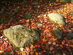 Rock-n-leaves