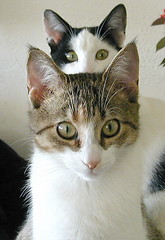 Siblings  / Broer en Zus (friedkampes) Tags: cats cat memories siblings most runaway e950 friedkampes