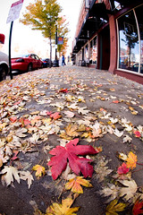 Fall in the River Market (Luke Williams) Tags: autumn color fall leaves canon leaf littlerock fisheye sidewalk 5d arkansas rivermarket pulaskicounty canon15mmfisheye canonef15mmf28fisheye 1213print