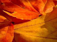 jesiennie mi.. (asik.) Tags: jesień kolory ulubione abigfave koloryjesieni