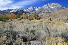 Cerro Gordo Buttermilk 250 (Steve Perdue) Tags: fallcolor 395 easternsierra