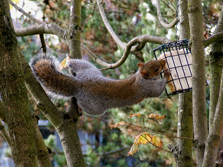 Cirque du Soleil - Squirrel Style