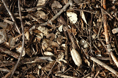 (tangent) Tags: outdoors sticks afternoon earth deadleaves thehills foothillpark bayarea2006