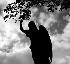 "I saw an Angel picking berries (Alternate title ""Heavy Metal Angel"") (Anima Fotografie) Tags: ireland bw friedhof cemeteries dublin cemetery graveyard angel death cementerio cemitrio cimetire cementerios cemitrios cimiteri cimetires steiner62 friedhoefe scoreme38 challengeyouwinner cimiteris"