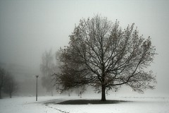 a tree in the mist