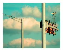 Bird subcommittee on traffic (Angelrays) Tags: sky birds clouds lights fly traffic stop utata poles birdseye abigfave