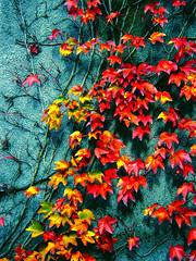 My lost passion 2 (ayat83) Tags: life autumn canada love nature topf25 beauty leaves wall vancouver season lost death space cluster dream ubc memory passion veins transmission ayat abigfave ci33 flickrplatinum