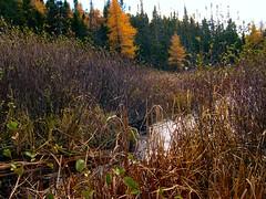 gander4 (Stephen Downes) Tags: canada newfoundland gander