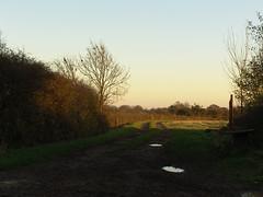 Bridleway (hajs) Tags: shadow tree puddle evening path farm sony cybershot f828 saunderson hajs wickey