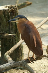 Birds at Jurong Park (dbillian) Tags: bird nature birds animal animals singapore wildlife jurong damon damonbillian billian