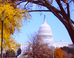 Autumn in Washington DC (` Toshio ') Tags: city autumn building fall architecture washingtondc dc washington districtofcolumbia uscapitol capitol dome toshio