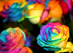 Rainbow Rose (jerikojosh) Tags: abstract flower floral rose digital canon rainbow flora bravo colorful vibrant surreal 5d whoa quirky naturesfinest manmadenature technocolor floraltechnology rainbowrose flowerpicturesnolimits stunningphotogpin