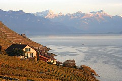 Rgion du Lavaux entre Lausanne et Vevey (__TeepeeT__) Tags: suisse couleurs swiss scout paysages vaud lavaux faved laclman romandie abigfave