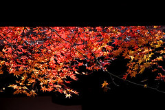 (yocca) Tags: nov autumn red leaves japan wow temple leaf kyoto 2006 100v10f momiji